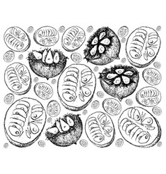 Hand drawn background of fresh monk fruits vector