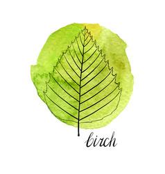 Leaf of birch tree vector