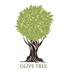 Logo olive tree vector
