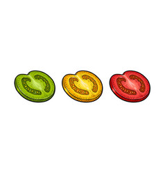 Piece tomato color engraved vector