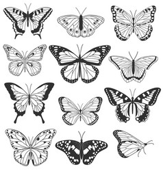 set realistic butterflies isolated on white vector image