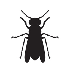 Wasp Sketch of Wasp Wasp isolated on white vector image