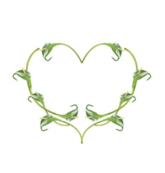 Beautiful Green Anthurium Flowers in Heart Shape vector image