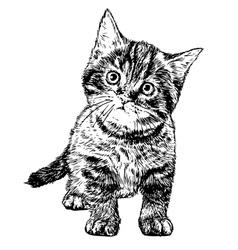Cat 04 vector