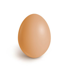 realistic chicken egg vector image