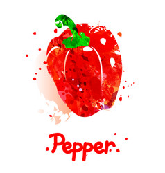 Watercolor of pepper vector