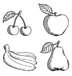 fruits sketch vector image vector image