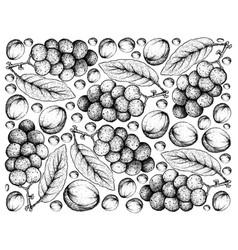 Hand drawn background of fresh langsat fruits vector