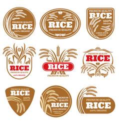 paddy grain organic rice labels healthy food vector image vector image