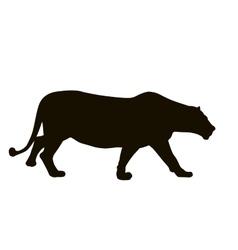 Lion hunt vector image