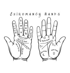 chiromancy hands vector image