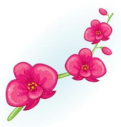 Pink prchid branch vector