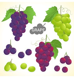 Set of grapes in various styles vector image