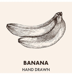 Sketch banana Hand drawn Fruit collection vector image