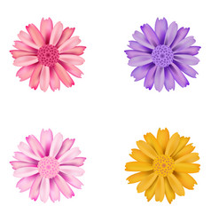 set of dahlia flowers vector image vector image