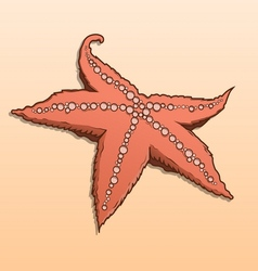 Detailed colored starfish vector image