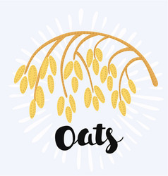 Drawing of spikelet of oat on the white vector