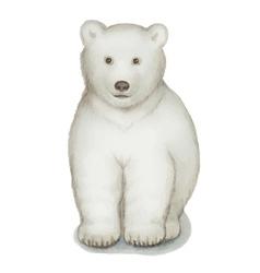Polar bear watercolor isolated on a white vector