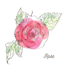 rose for valentine graphic design vector image vector image