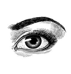 hand-drawn beautiful female eye sketch makeup vector image vector image