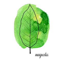 Leaf of magnolia tree vector