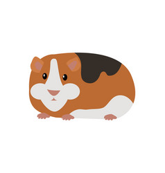 guinea pig cavia porcellus isolated cartoon animal vector image vector image