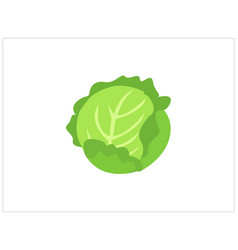 Green cabbage vegetable isolated vector
