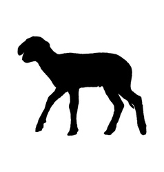 Lamb on white vector