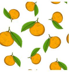 mandarin orange hand drawn colored sketch as vector image
