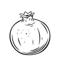 Pomegranate fruit outline icon vector