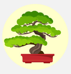 bonsai pine decorative small tree growing in vector image vector image