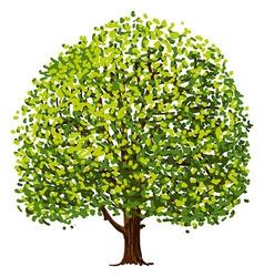 Tree Drawing vector image vector image