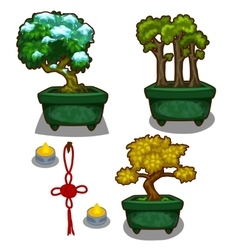 Three little tree bonsai candles and decoration vector image vector image
