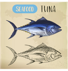 Bullet or bluefin tuna sketch for signboard vector