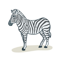 Cartoon cute zebra vector