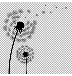 Dandelion with transparent background vector