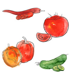 Drawing vegetables vector