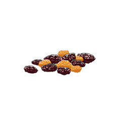 Dry berries grapes isolated dried raisins vector