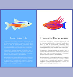 Filamented flasher wrasse and neon tetra fish vector