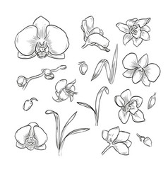 hand drawn elegant orchid vector image