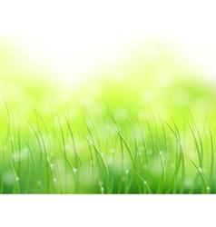 morning sunlight grass vector image