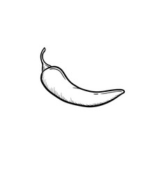 chili pepper hand drawn sketch icon vector image