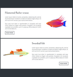Filamented flasher wrasse set vector