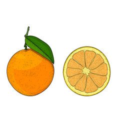 Orange whole and slice hand drawn colored sketch vector