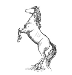 White horse rearing on hind hoof sketch portrait vector image vector image