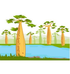 Baobabs nea the river beautiful baobab tree vector