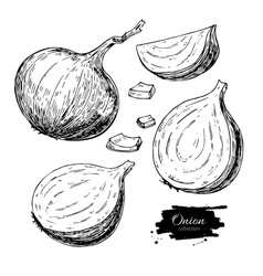 Onion hand drawn set Full half and cutout vector
