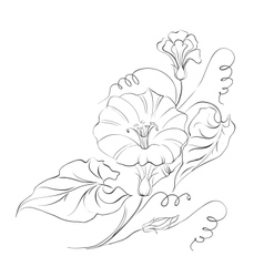 Bindweed flower in white vector