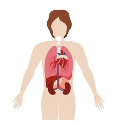 half body man body with inner organs vector image