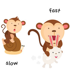 Opposite slow and fast vector